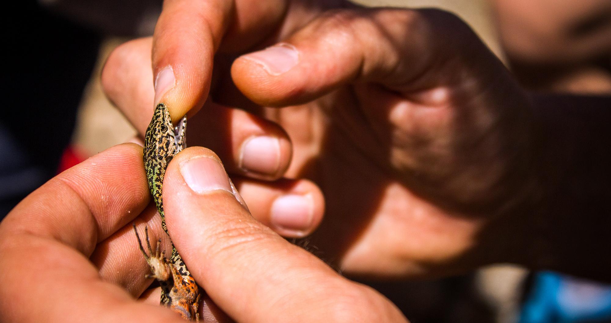 Bioblitz: à descoberta da biodiversidade da Ebio do Merujal